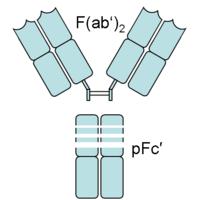 200px-F_ab2_pFc